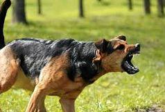 سگ مهاجم پیرزن 80 ساله را خورد