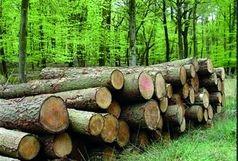 کشف 5 تن چوب جنگلی قاچاق در املش
