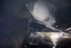 جزئیات حادثه آتش سوزی مسکن مهر رشت