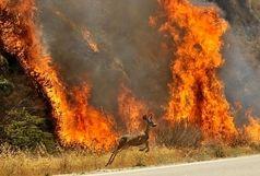سوختن ۶۴ هکتار از مزارع و مراتع ایلام در آتش