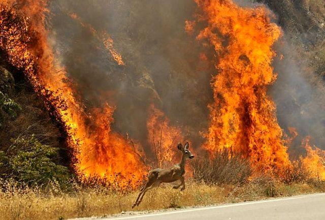 آتش سوزی در 50 هکتار از مراتع طبیعی