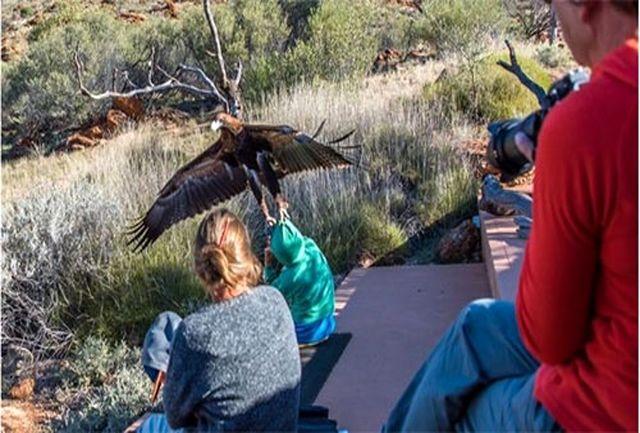 عقابی که قصد شکار یک پسربچه 7 ساله را داشت/ببینید