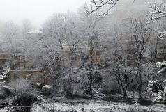 تداوم بارش برف در گیلان