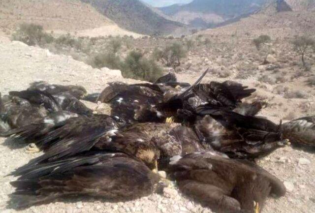 علت مرگ عقابهای فارس نامشخص است
