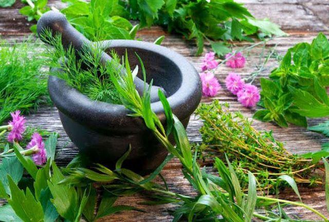 گیاهانی که تاییدیه علمی گرفتند