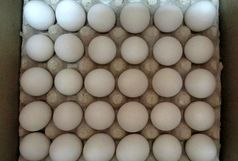کشف بیش از 3 تن تخممرغ فاسد