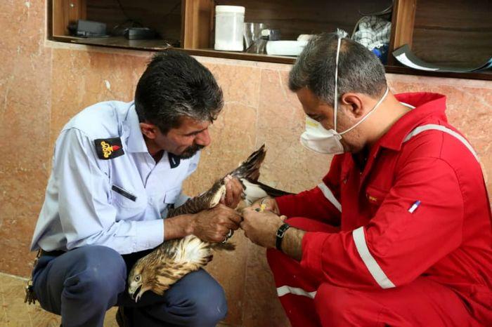 نجات جان یک بهله شاهین گرفتار در دام قاچاقچیان+ببینید