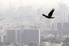 آلودگی هوا ۲۰۰۰ بیمار به اورژانس کشاند