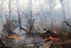 ۲۳ درصد از آتش سوزی های تهران مربوط به فضای سبز / از روشن کردن آتش در بوته زارها خودداری کنید