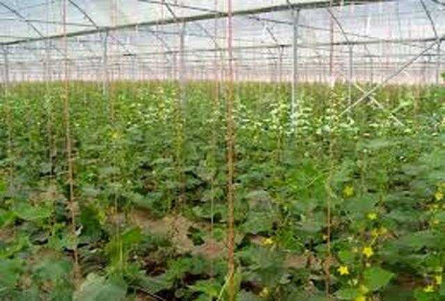امسال؛ پایان مطالعات مجتمع گلخانه اسفراین