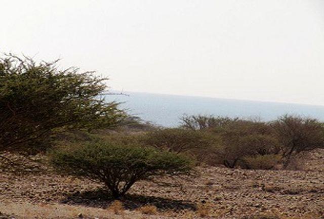 طرح ممیزی مراتع در 100 هزار هکتار از اراضی مرتعی شهرستان بندرلنگه آغاز شد