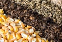 کشف 422 تن خوراک دام احتکار شده در