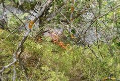 آخرین وضعیت  آتش سوزی جنگل های ارسباران/اعزام بالگرد به منطقه