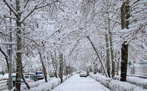 85 کشته و مصدوم حاصل بارش سنگین برف در گیلان