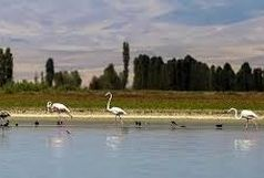 تالاب پتهخور شهرستان نمین منطقه شکار ممنوع شد