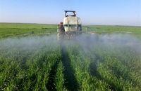 مبارزه با علف ها هرز در سطح ۴ میلیون هکتار از مزارع کشور