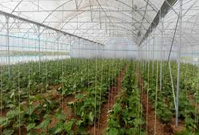 عزم دولت برای ایجاد اشتغال در توسعه مجتمع های گلخانه ای