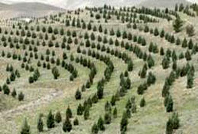 ایجاد ۲۵ کیلومتر کمربند سبز حفاظتی در همدان