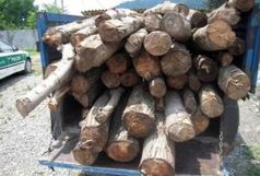 دو قاچاقچی چوب در رودبار دستگیر شدند
