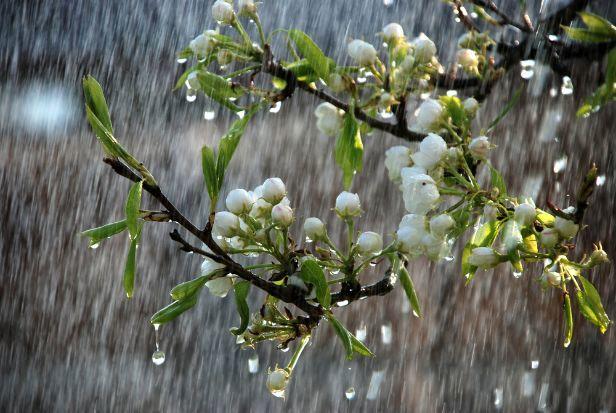 بارش باران بهاری در 27 استان کشور