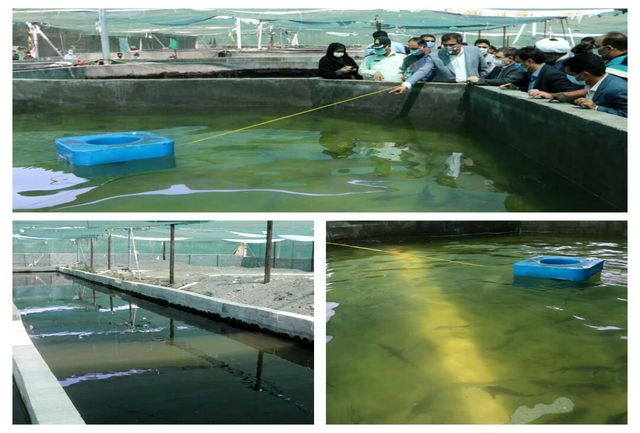 پرورش میگو در آب شیرین یک کار نوآورانه در شهرستان رودان است