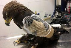 برخورد عقاب طلایی با دکل برق فشارقوی در البرز+ عکس