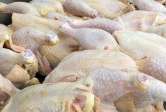 کشف 2تن گوشت مرغ فاسد در فاروج