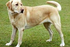74 ضربه شلاق حکم سگ آزار کوچصفهانی