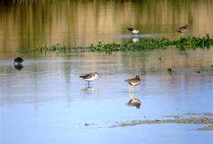 شکار و صید پرندگان در مناطق آلوده به آنفلوانزا ممنوع میشود