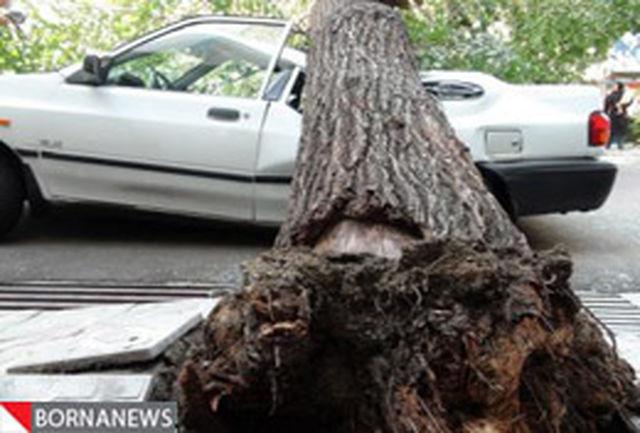 سقوط درخت تنومند بر روی خودروی سواری