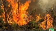 آخرین اخبار آتش سوزی جنگل های زاگرسی