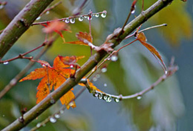 بارش های سال آبی جاری در بهترین شرایط به 200 میلی متر می رسد