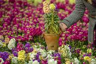 گشایش نمایشگاه گیاهان دارویی و زینتی در همدان