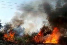 35 هکتار از اراضی باغی و جنگلی میناب طعمه حریق شد