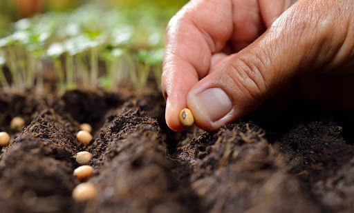 چشمانداز تولید بذر کشور اعلام شد