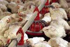 دستگیری سه نفر درحال خارج کردن مرغ از گلستان