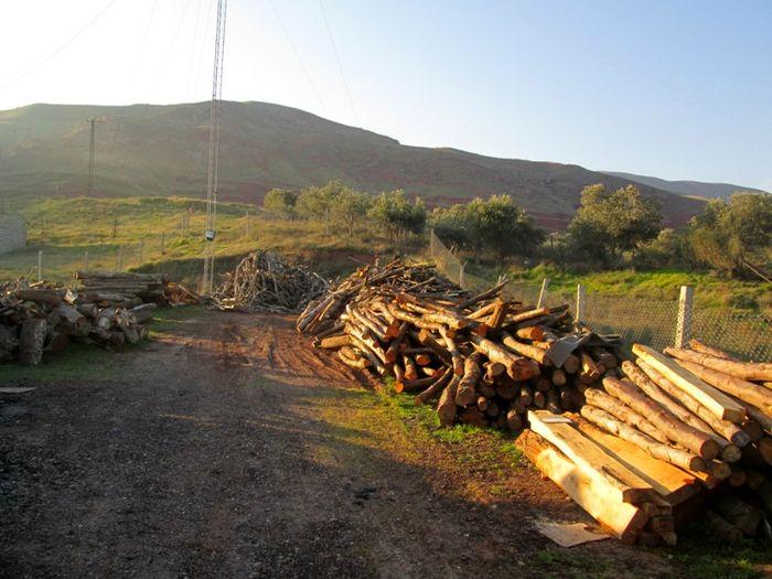 کشف 24 تن چوب قاچاق