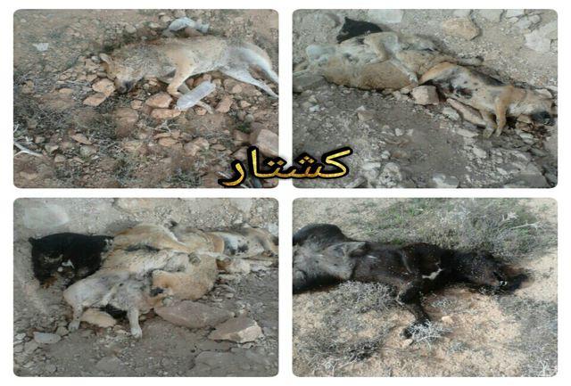 سگ کشی در جاده  شهرصدرا / خطر در کمین سلامت مردم