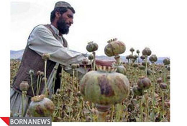 درآمد 400 میلیون دلاری طالبان از کشت خشخاش
