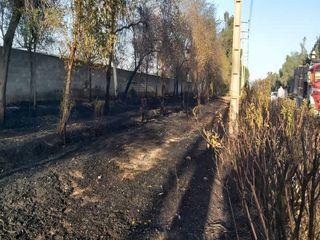 آتش سوزی فضای سبز قدیمی اهواز