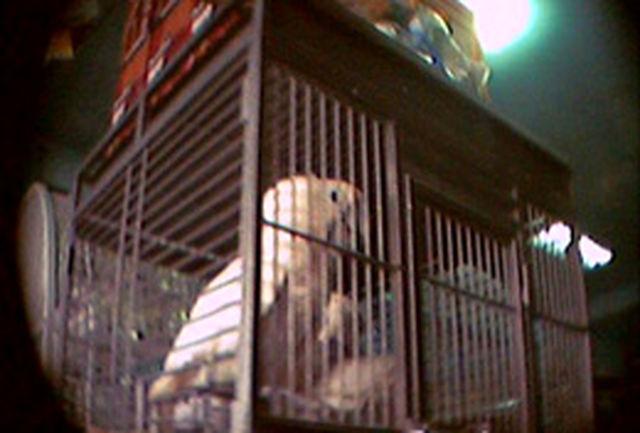 کشف طوطیهای قاچاق در زاهدان