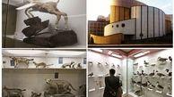 بازدید رایگان از موزه تاریخ طبیعی ارومیه در دهه فجر
