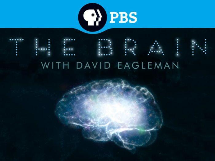مجموعه جذاب «داستان مغز با دیوید ایگلمن»/ببینید