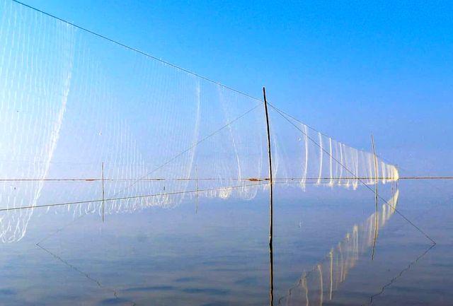 جریمه 2 میلیاردی در انتظار شکارچیان پرندگان/جمع آوری 250 دام هوایی در یک روز/ نصب دام هوایی غیرقانونی است/شکار در استان مازندران ممنوع است