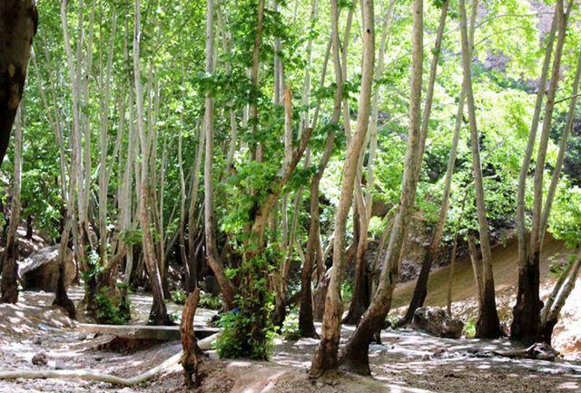 پلمب ۱۰ مورد از باغات و اماکن تفریحی متخلف در یاسوج