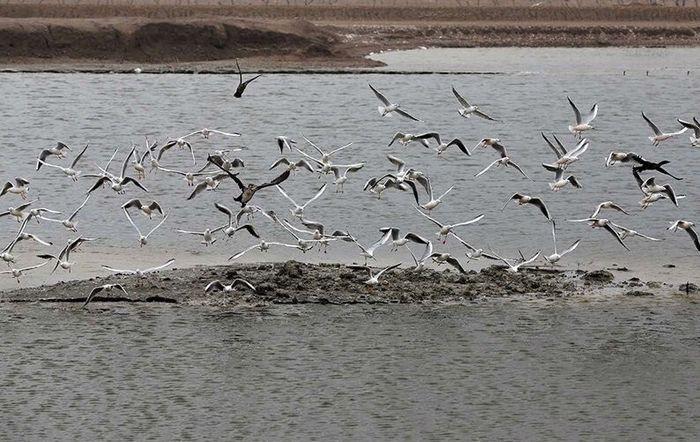 پرندگان مهاجر میهمان هورالعظیم