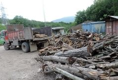 کشف 15 تن چوب جنگلی قاچاق در آستانه اشرفیه