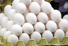 تولید ٦٧٤ هزار تن تخم مرغ خوراکی