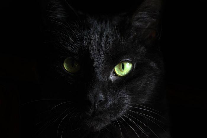 نجات از کرونا با خوردن گوشت گربه سیاه!