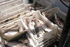کشف بیش از2000 هزارکیلوگرم ماهی قاچاق در جزیره قشم